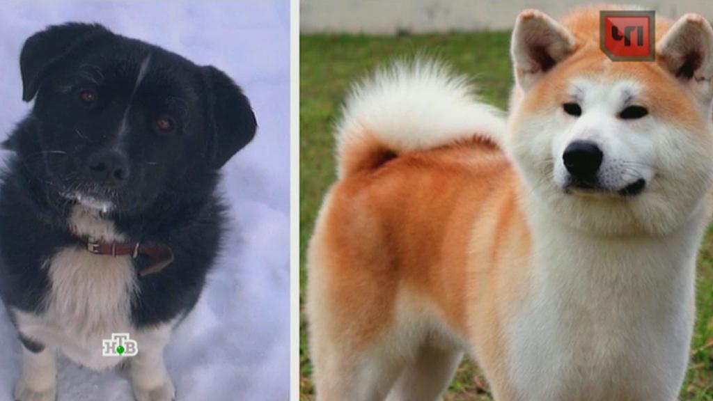 фотографии породистых собак