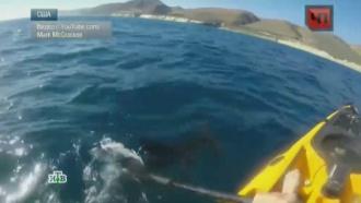 На Гавайях рыбак избил напавшую на него акулу