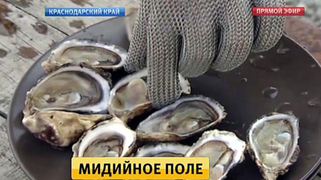 Сочинские фермеры наращивают производство мидий и устриц.рыба и рыбоводство, Сочи.НТВ.Ru: новости, видео, программы телеканала НТВ