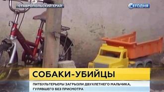 На Ставрополье усыпили псов-людоедов, растерзавших двухлетнего сына хозяев