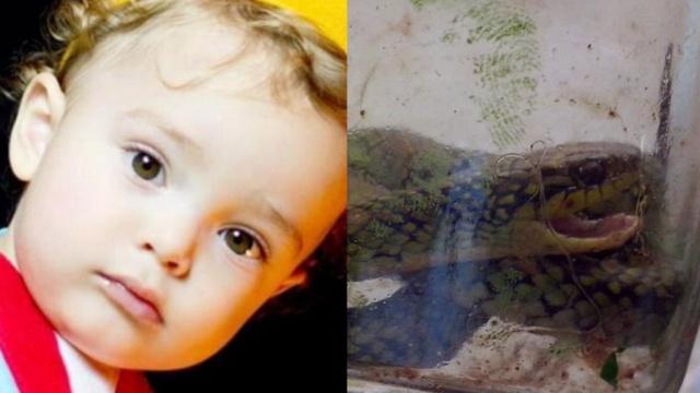 Ядовитая змея умерла от укуса маленького бразильца.Бразилия, дети и подростки, змеи.НТВ.Ru: новости, видео, программы телеканала НТВ