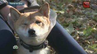 В Ростове-на-Дону ищут хозяйку агрессивного пса, нападающего на животных и людей