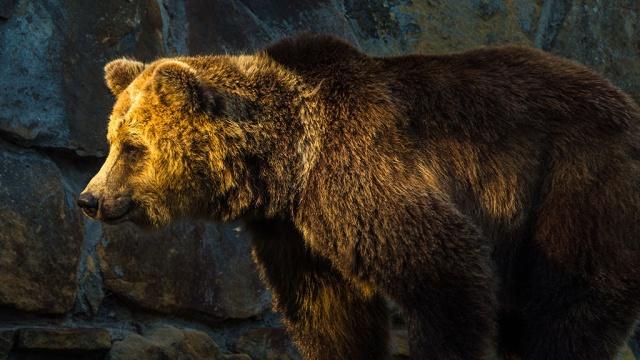 В Приморье застрелили напавшего на детей медведя.Приморье, дети и подростки, животные, медведи.НТВ.Ru: новости, видео, программы телеканала НТВ