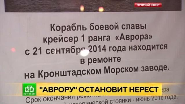 «Аврора» против корюшки: в Петербурге думают, как углубить для крейсера дно Невы и не навредить рыбе.Санкт-Петербург, армия и флот РФ, рыба и рыбоводство, экология.НТВ.Ru: новости, видео, программы телеканала НТВ