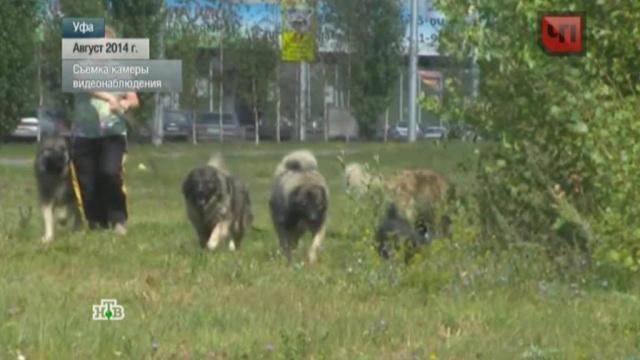 В Уфе собачница покусала соседа, отстаивая свою свору волкодавов.животные, Уфа, скандалы, собаки, нападения.НТВ.Ru: новости, видео, программы телеканала НТВ