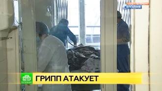 Атакующий грипп вынуждает петербуржцев скупать маски и лекарства