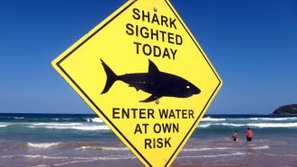 Вминувшем году акулы покусали рекордно высокое число американцев