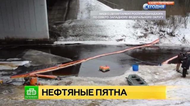 Нелегальная врезка в нефтепровод привела к загрязнению реки в Ленобласти.Ленинградская область, загрязнение окружающей среды, реки и озера, экология.НТВ.Ru: новости, видео, программы телеканала НТВ