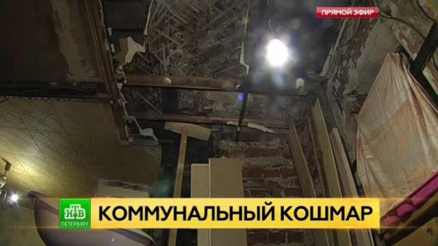 Полчища крыс атакуют семью петербурженки в доме без фундамента и туалета.ЖКХ, Санкт-Петербург, жилье.НТВ.Ru: новости, видео, программы телеканала НТВ