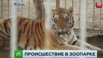 Очевидцы рассказали о нападении тигра на школьницу в зоопарке Барнаула