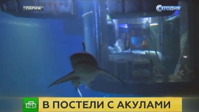 В парижском океанариуме предлагают провести романтическую ночь с акулами.акулы, выставки и музеи, животные, Париж, Франция.НТВ.Ru: новости, видео, программы телеканала НТВ