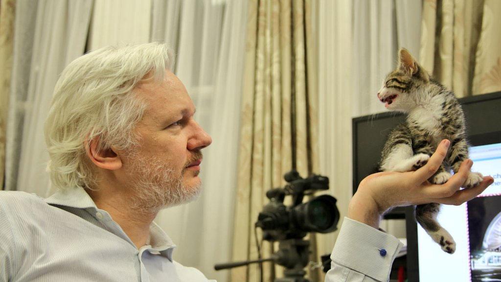 Дети основателя WikiLeaks подарили ему котенка
