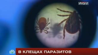 В клещах паразитов: как уберечься от кровопийц