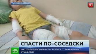 В Подмосковье мужчина отбил школьника у агрессивного пса