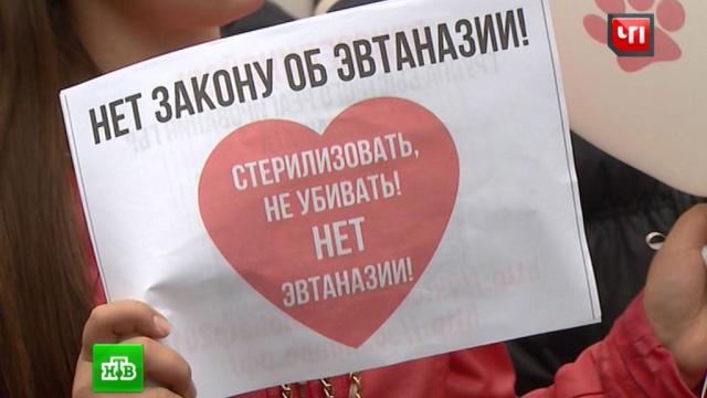 На митинге в Москве потребовали наказать живодеров из приюта «Эко Вешняки».Москва, животные, митинги и протесты.НТВ.Ru: новости, видео, программы телеканала НТВ
