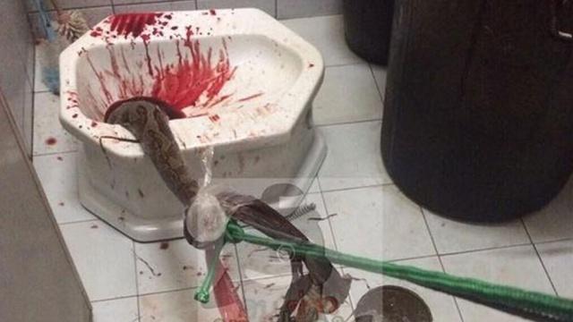 Гигантский питон из унитаза укусил за пенис жителя Таиланда: видео.животные, змеи, Таиланд, туалеты.НТВ.Ru: новости, видео, программы телеканала НТВ
