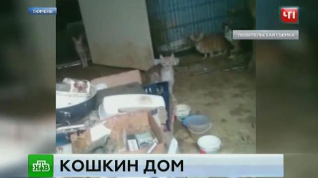 В тюменской квартире нашли 30 умирающих от голода кошек.жестокость, животные, кошки, полиция, Тюмень.НТВ.Ru: новости, видео, программы телеканала НТВ