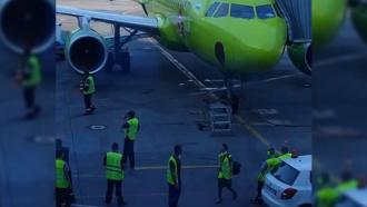 Пчелы атаковали Airbus в аэропорту Домодедово