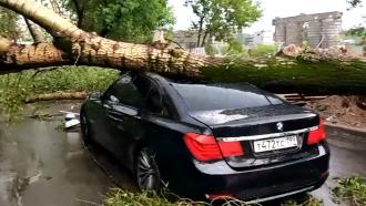 Около 10деревьев повалены врезультате грозы вМоскве