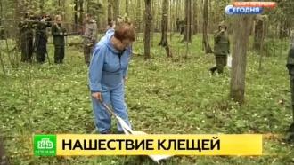 Врачи предупреждают петербуржцев о летней активности клещей