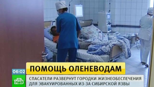 Вспышку сибирской язвы на Ямале объяснили жарой.Ямало-Ненецкий АО, болезни, карантин, олени.НТВ.Ru: новости, видео, программы телеканала НТВ