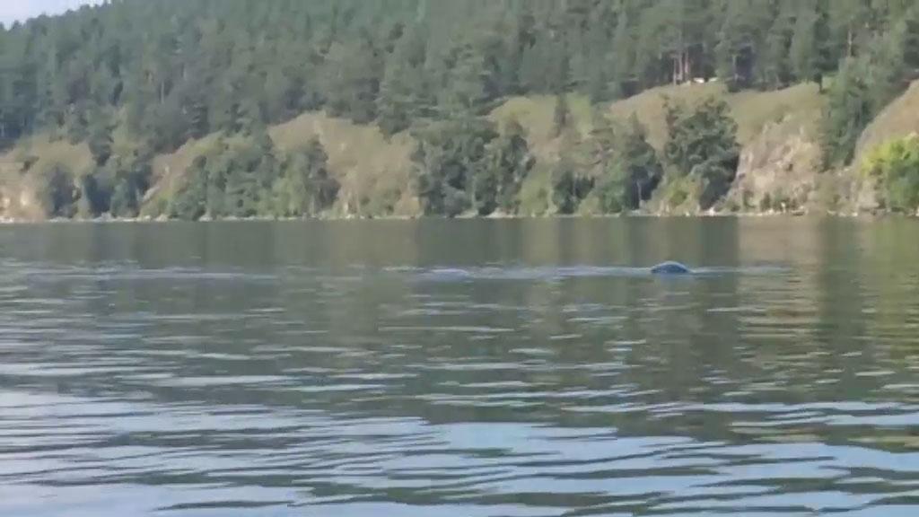 Загадочное существо заметили в уральском озере: видео