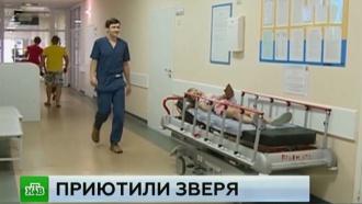 В Перми взятый из приюта пес изувечил пятилетнюю девочку