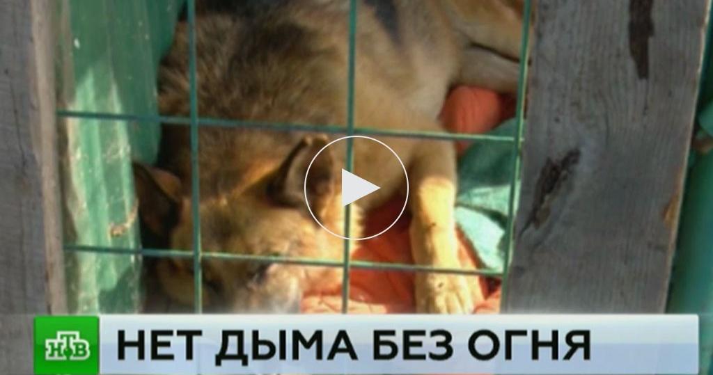Мега животные фото соболезнования можно
