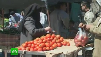 Россельхознадзор назвал сроки снятия запрета на ввоз овощей ифруктов из Египта