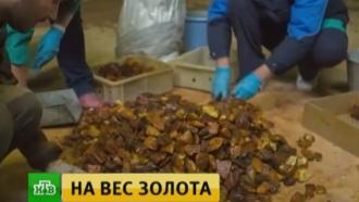 В Светлогорске открылся первый экономический форум специалистов по янтарю