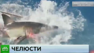 Мексиканский дайвер чудом выжил после встречи сбелой акулой