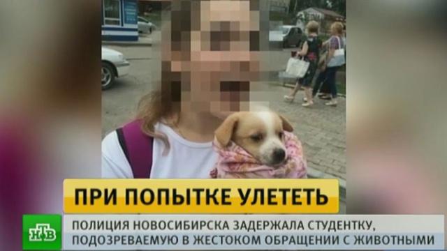На одну из хабаровских живодерок завели уголовное дело.Хабаровск, жестокость, животные, издевательства.НТВ.Ru: новости, видео, программы телеканала НТВ