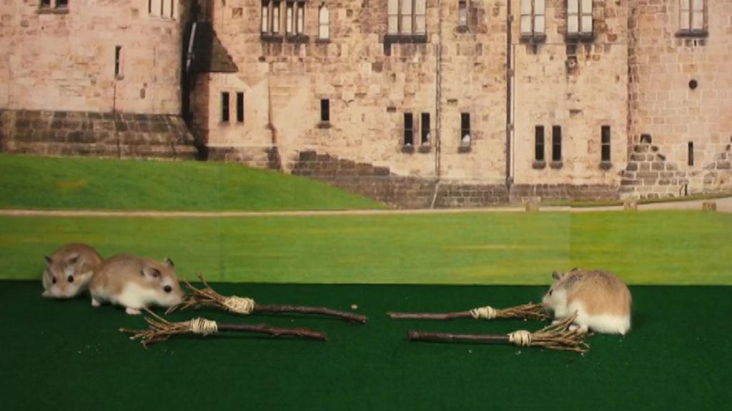 Блогеры сняли хомяка впародии на Гарри Поттера