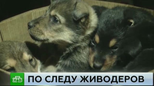 Жители поселка на окраине Челябинска устроили охоту на живодеров.жестокость, животные, собаки, Челябинская область.НТВ.Ru: новости, видео, программы телеканала НТВ