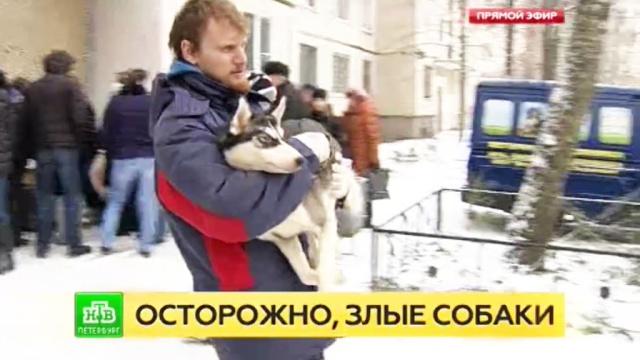 В Петербурге покусавших девочку собак отправили на карантин.Санкт-Петербург, дети и подростки, животные, несчастные случаи, собаки.НТВ.Ru: новости, видео, программы телеканала НТВ