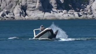 Прокуратура проверяет видео, на котором туристы на катере давят гренландского кита