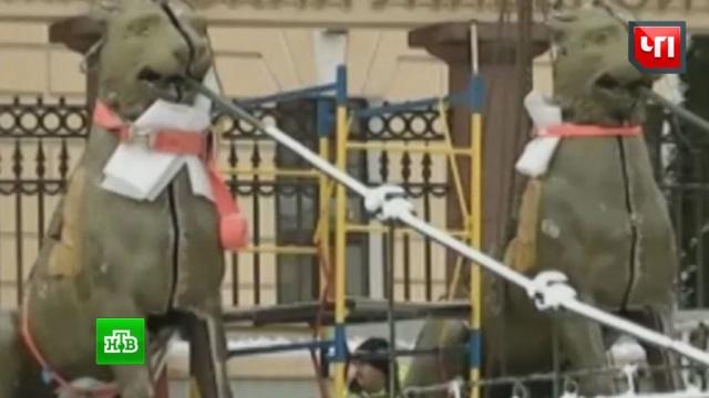ВПетербурге в200-летних грифонах нашли записки имонеты.Санкт-Петербург, история, мосты, реконструкция и реставрация, скульптура.НТВ.Ru: новости, видео, программы телеканала НТВ