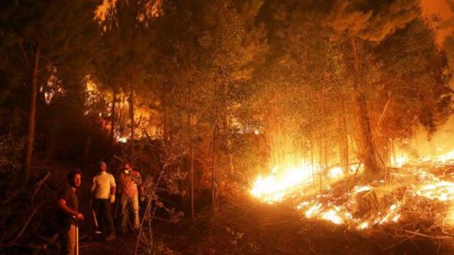 Лесные пожары вЧили уничтожили город.Чили, лесные пожары, стихийные бедствия.НТВ.Ru: новости, видео, программы телеканала НТВ