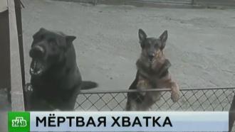 Растерзанную собаками вдову актера Ваца можно было спасти