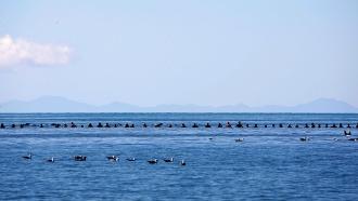 Еще две сотни дельфинов выбросились на побережье Новой Зеландии