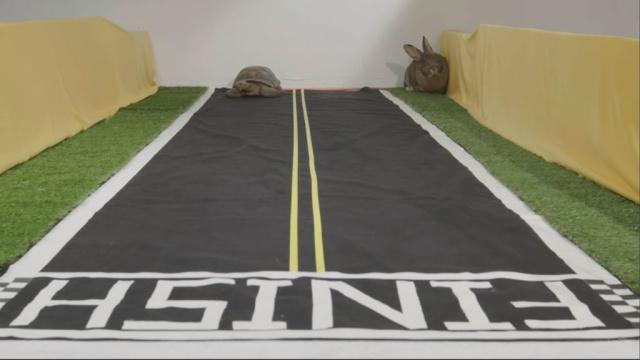 Черепаха обогнала зайца в40-минутной «гонке».Facebook, животные, Интернет, курьезы.НТВ.Ru: новости, видео, программы телеканала НТВ