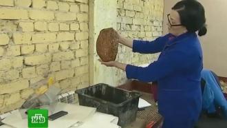 В Калининграде решают, что делать с добытым гигантским янтарем