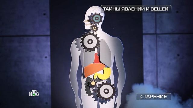 Эликсир вечной молодости: как ученые пытаются остановить старение.здоровье, наука и открытия.НТВ.Ru: новости, видео, программы телеканала НТВ