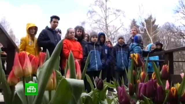 Пальмы, кактусы иорхидеи: вокалисты шоу «Ты супер!» побывали втропическом раю.НТВ.Ru: новости, видео, программы телеканала НТВ