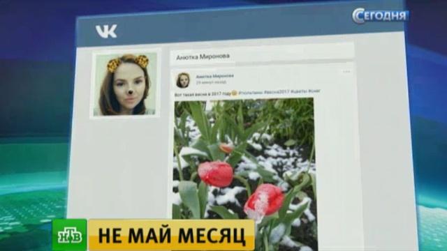 Тема аномальной погоды лидирует на страницах в соцсетях москвичей.весна, Москва, погода, снег, соцсети.НТВ.Ru: новости, видео, программы телеканала НТВ