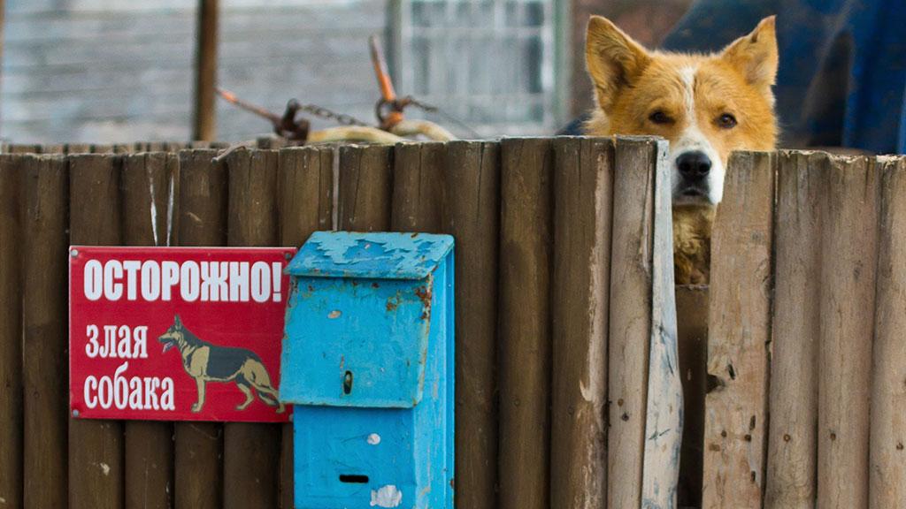 Законопроект о защите жилья любыми способами.Госдума, законодательство, кражи и ограбления, нападения, НТВ.НТВ.Ru: новости, видео, программы телеканала НТВ