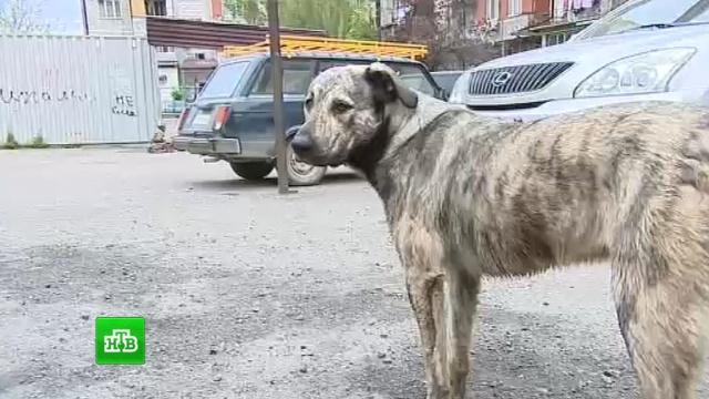 ВМахачкале прохожие спасли мальчика от стаи бродячих псов.Дагестан, дети и подростки, животные, нападения, собаки.НТВ.Ru: новости, видео, программы телеканала НТВ