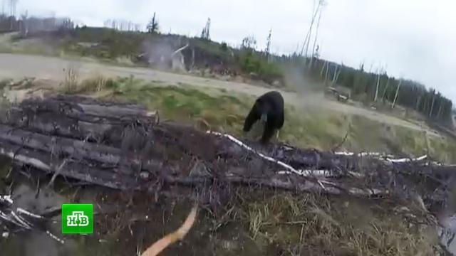 Канадский охотник выжил после нападения медведя.Канада, животные, медведи, охота и рыбалка.НТВ.Ru: новости, видео, программы телеканала НТВ