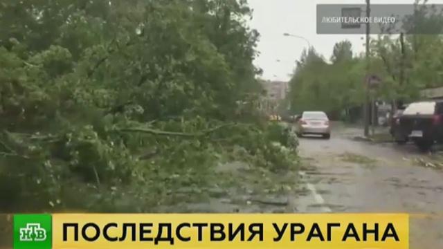 Власти Москвы утвердили сумму компенсации семьям жертв урагана.Москва, погода, штормы и ураганы.НТВ.Ru: новости, видео, программы телеканала НТВ