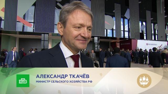 Александр Ткачёв: мы будем осваивать все новые рынки, где нас ждут.Турция, торговля, Санкт-Петербург, сельское хозяйство, экспорт, экономика и бизнес, эксклюзив, зерно.НТВ.Ru: новости, видео, программы телеканала НТВ